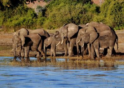 Elefanten am Chobe