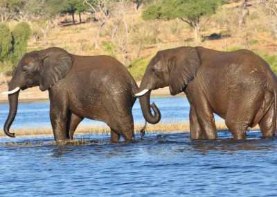 Elefanten, Chobe Nationalpark