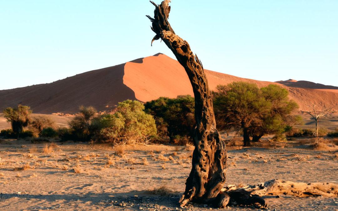 Traumreise in das atemberaubende NAMIBIA, 09.05.2020-22.05.2020 / 24.10.2020-06.11.2020