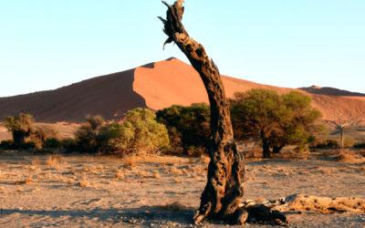Traumreise in das atemberaubende NAMIBIA, 24.10.2020-06.11.2020